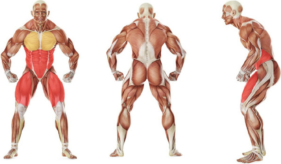 What muscles work in the exercise Бег в упоре лежа